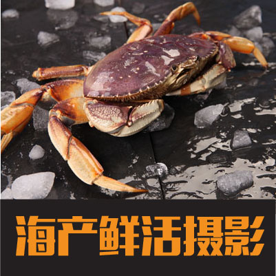 鲜活海鲜海产品商业摄影